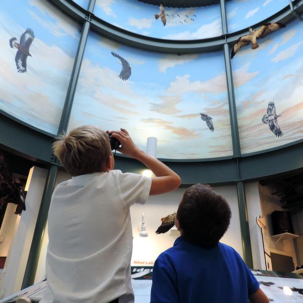 Masters of the Sky Program @ National Eagle Center