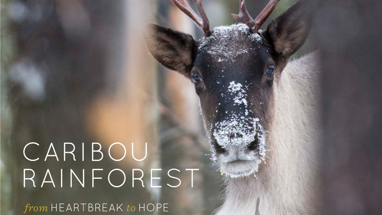 Caribou Rainforest: From Heartbreak to Hope @ Revelstoke Performing Arts Center |  |  |