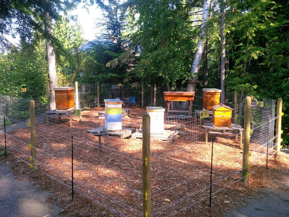 Intro to Beekeeping Workshop @ Revelstoke Community Centre |  |  |