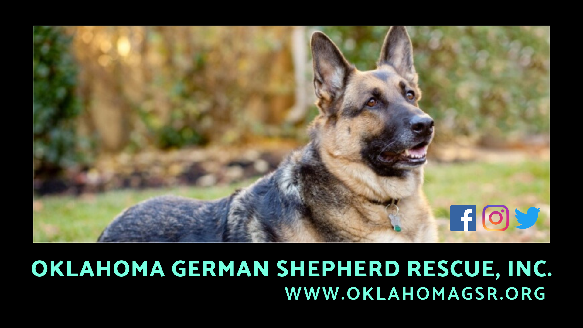 Calendar | OKC Pets Magazine Online