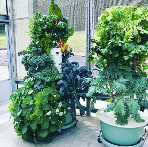Garden Guru: Hydroponic Growing @  |  |