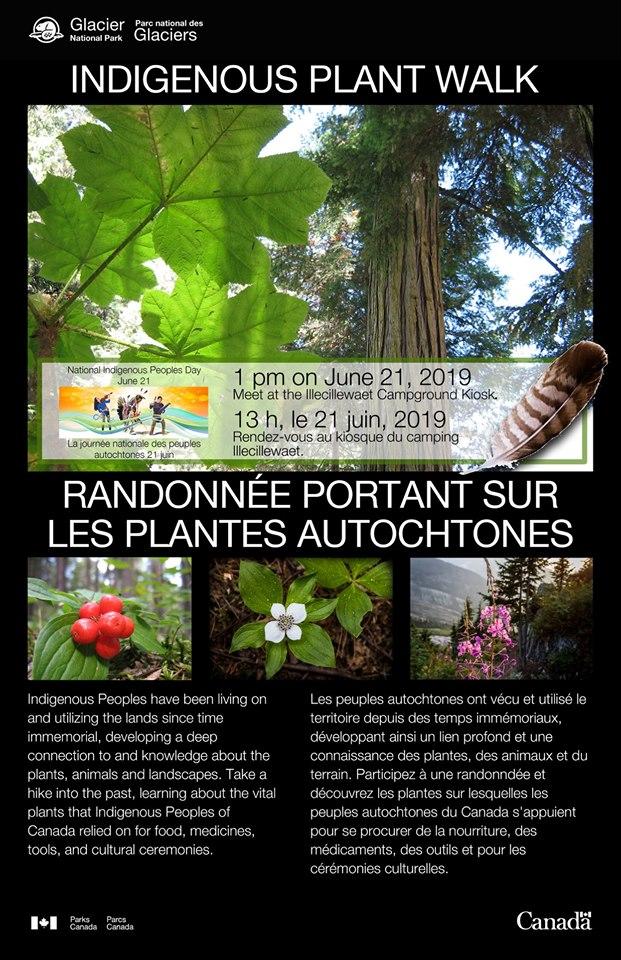 Indigenous Plant Walk @ Illecillewaet Camprgound Kiosk |  |  |