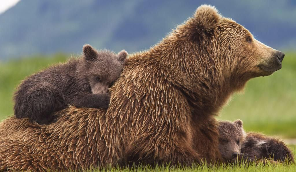 Story Time - LIVE! All About Bears! @ Okanagan Regional Library Revelstoke Branch |  |  |